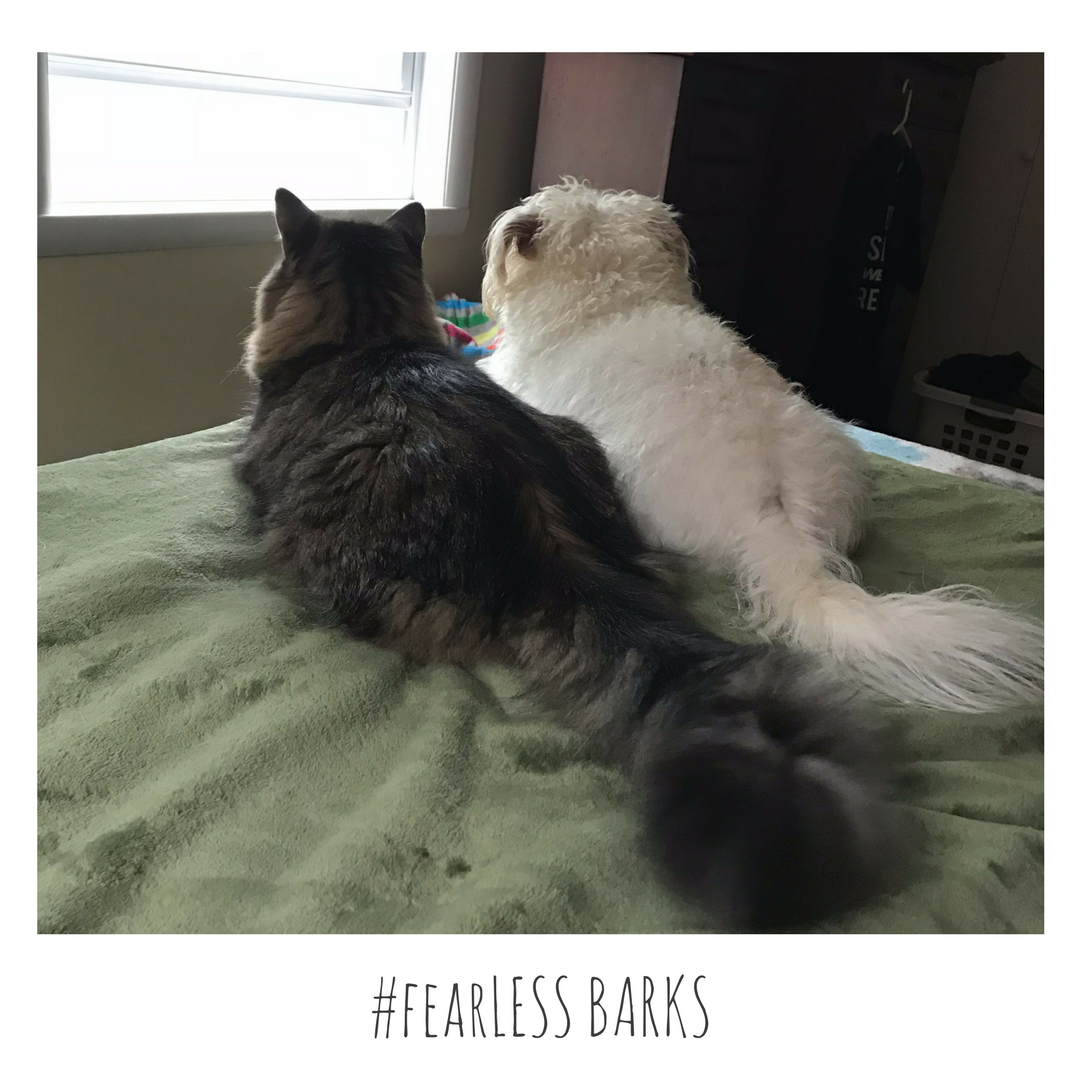 #fearLESS BARKS 8