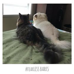 #fearLESS BARKS 8