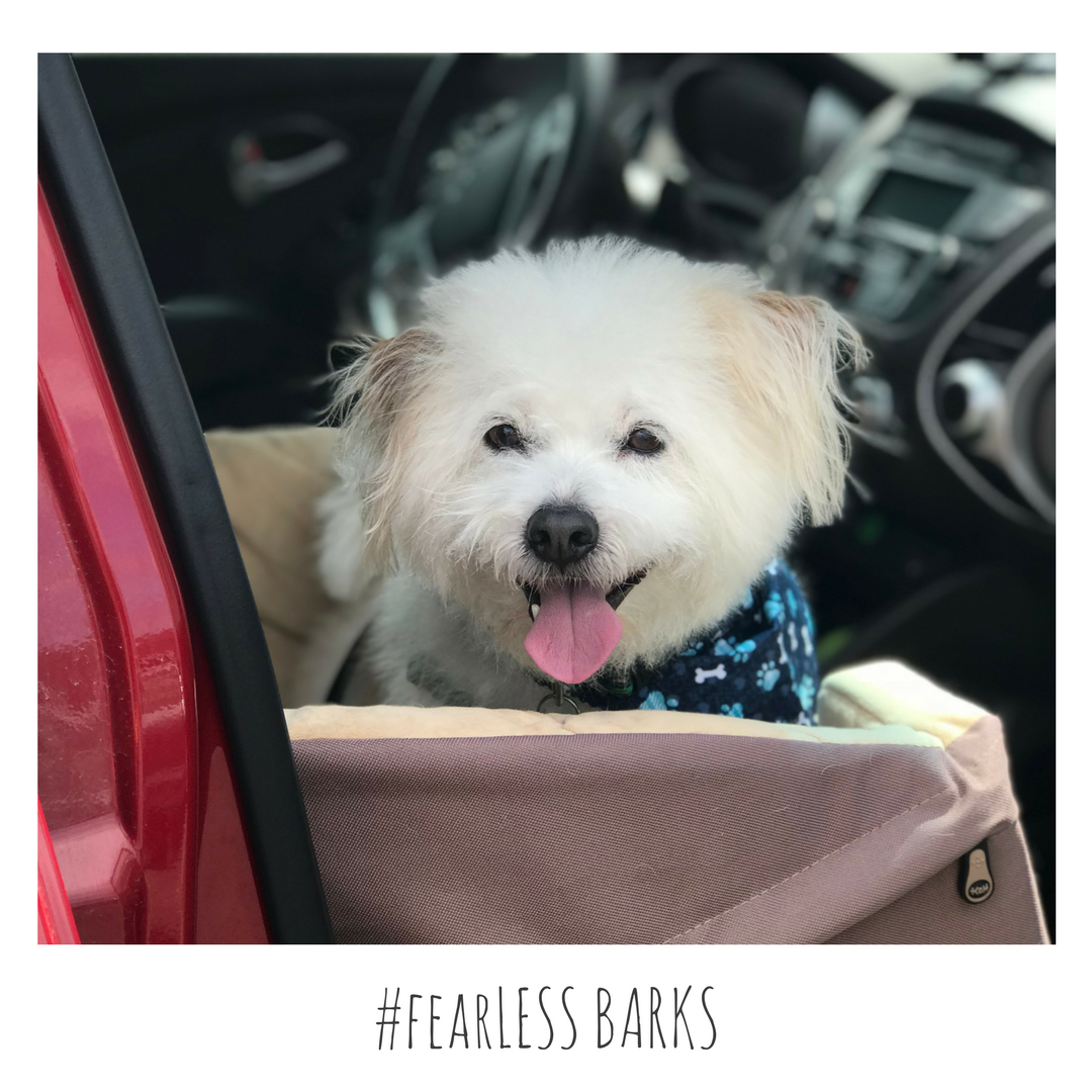 #fearLESS BARKS 22