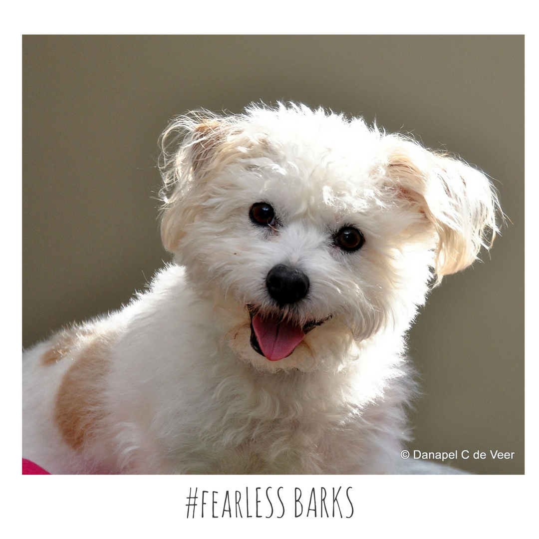 #fearLESS BARKS 6