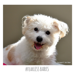 #fearLESS BARKS 6
