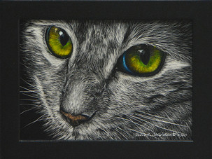 The Eyes Have It  $ 225 SOLD