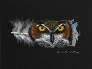 The Stare - Great Horned Owl