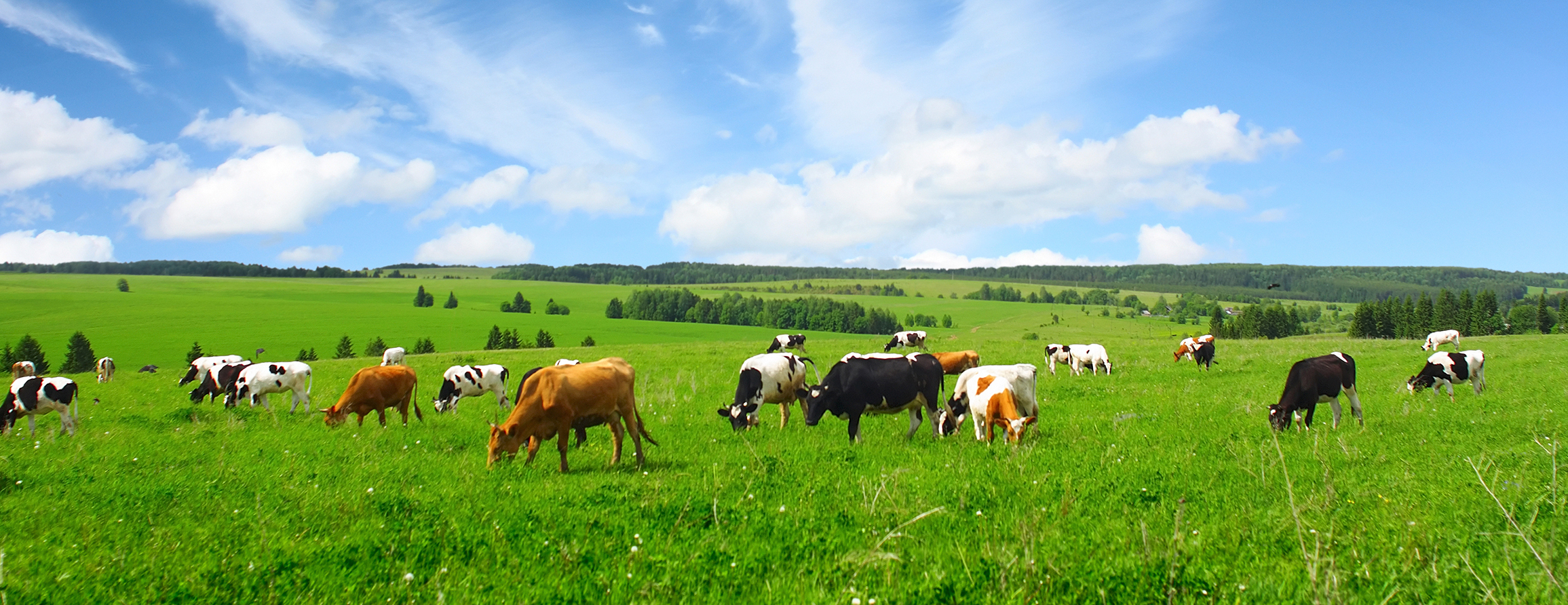 Farm and Livestock Insurance