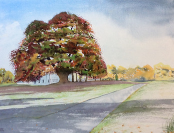 Patrick and Sally's Copper Beech