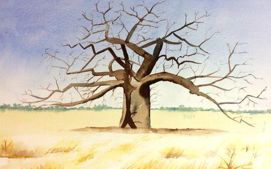Boboa Tree