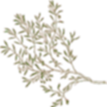 branch-304088_640_edited.png