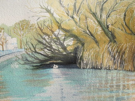 Swan Swims Home