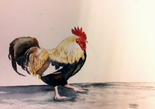 The Strutting Cock