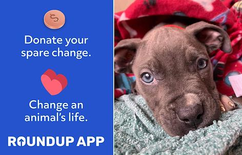 Change Lives Animal Roundup.png