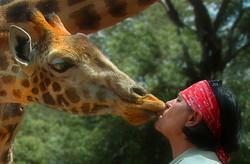 giraffenbussi