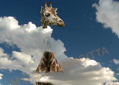 Über den Wolken.._1.jpg