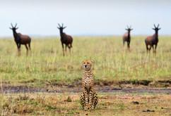 african_wildlife_1_Brigitta_Moser__Jäger