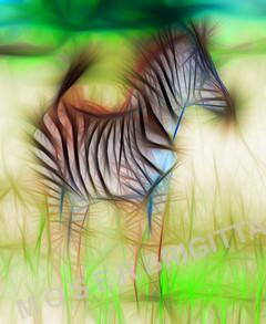 2_Exp_Brigitta Moser_Kleines Zebra.jpg