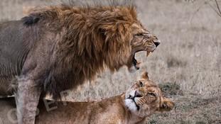 5-4-Moser-Brigitta-Masai Mara.jpg