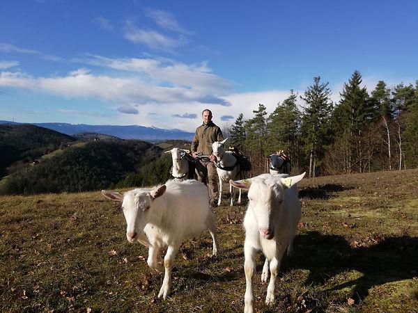 Ziegenwandern mit Packziegen am Altenber
