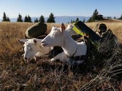 Ziegenwandern, Herbststimmung