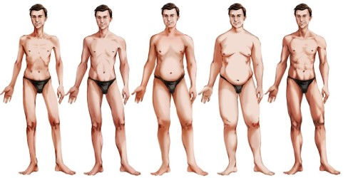 male body types.jpg
