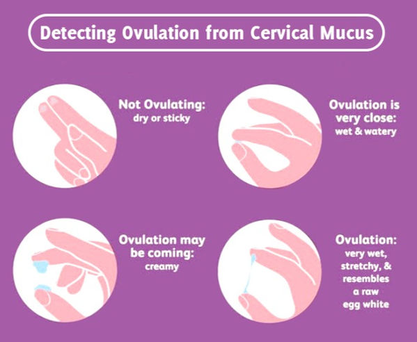 ovulation%20cervical%20fluid_edited.jpg