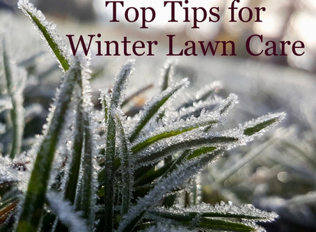 Top Tips for Winter Lawn Care