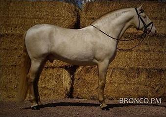 Bronco.jpg.png