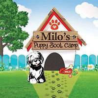 milos puppy boot camp.jpeg