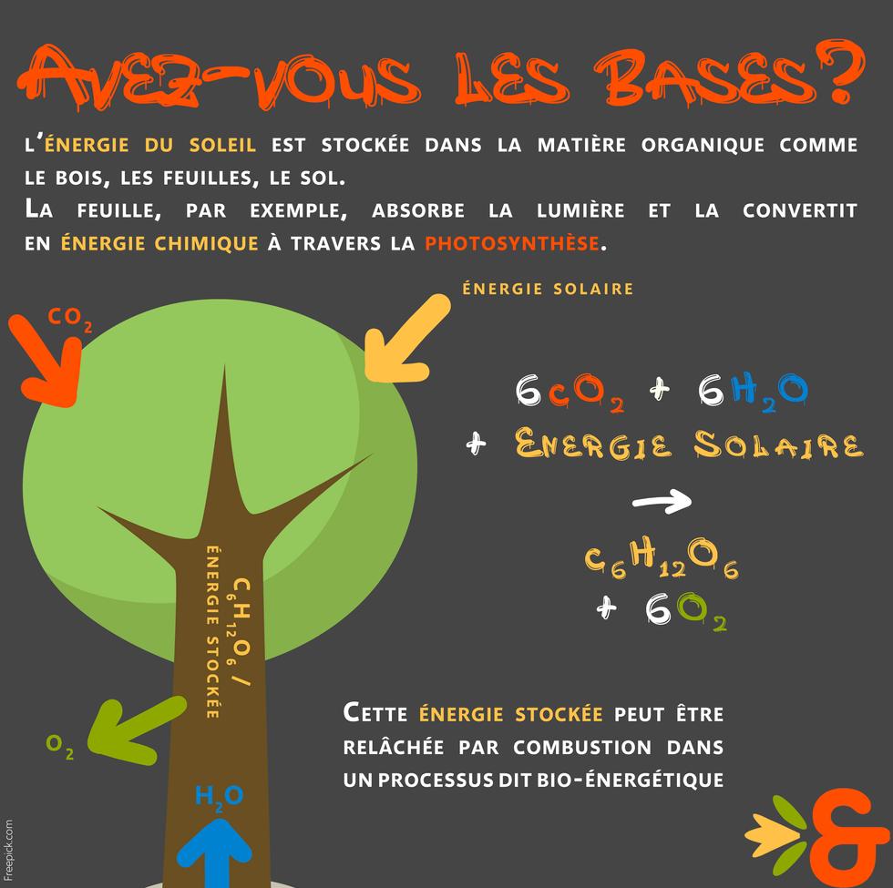 1. Bioénergies photosynthèse.png