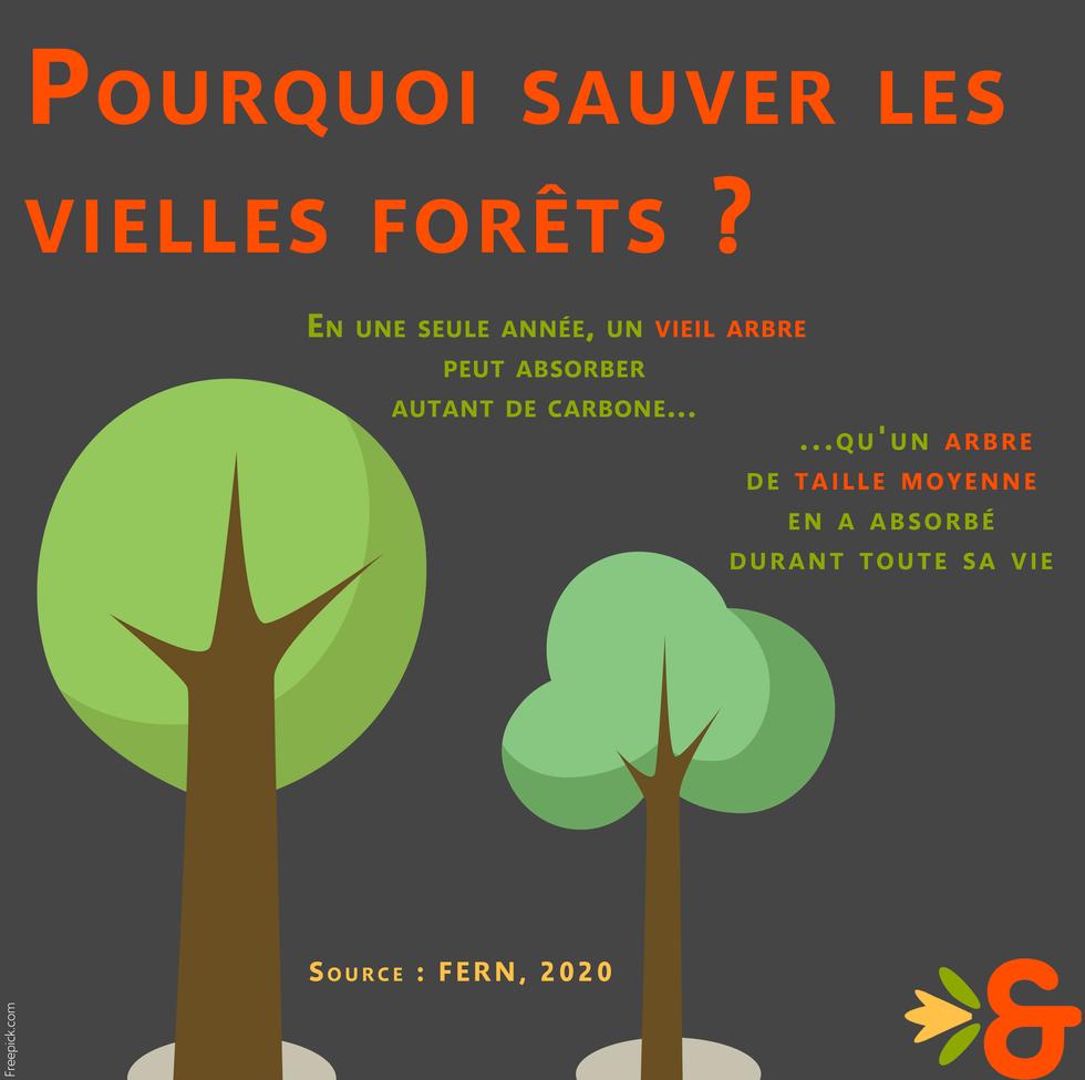 Déforestation_vielles_forets.png