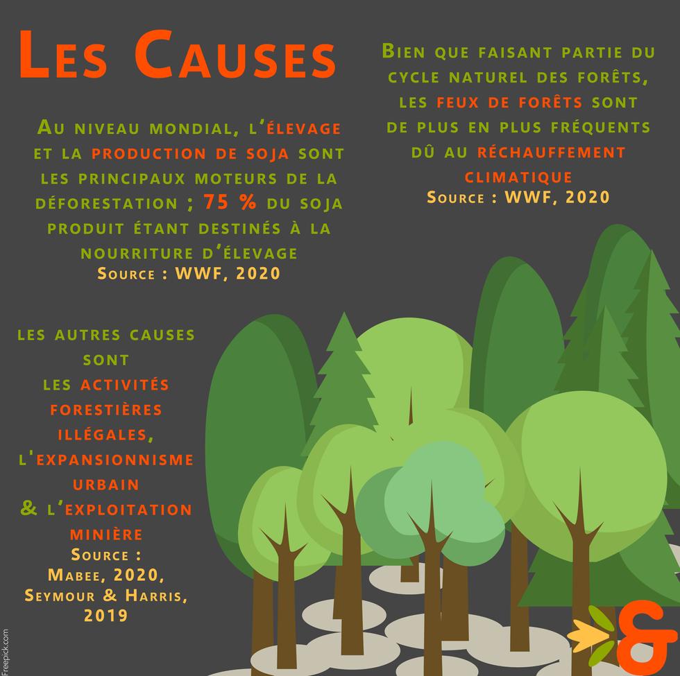 Déforestation_causes.png