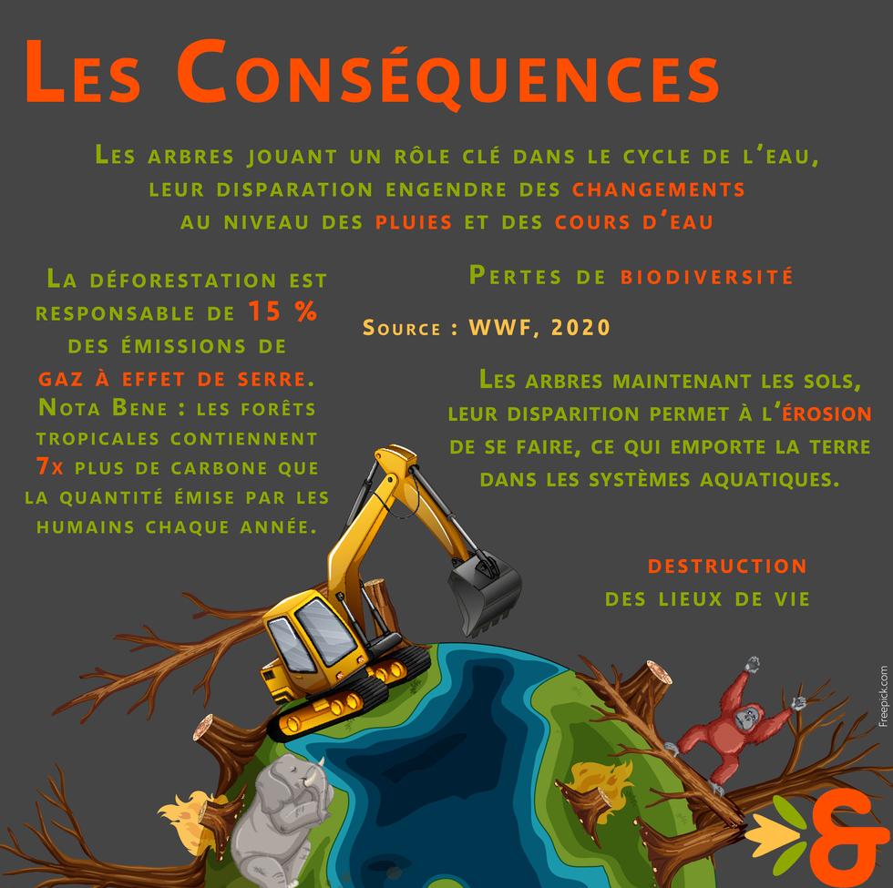 Déforestation_conséquences.png