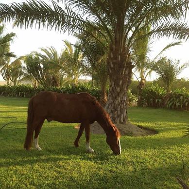 Estancia para caballos