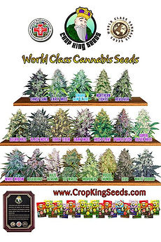 Crop-King-Seeds.jpg