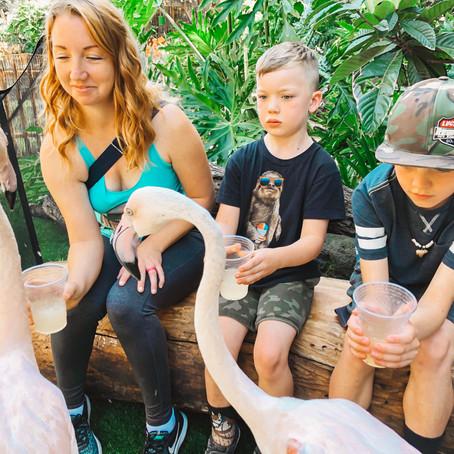 Flamingo Mingle at the LA Zoo