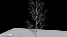 Vex Tree