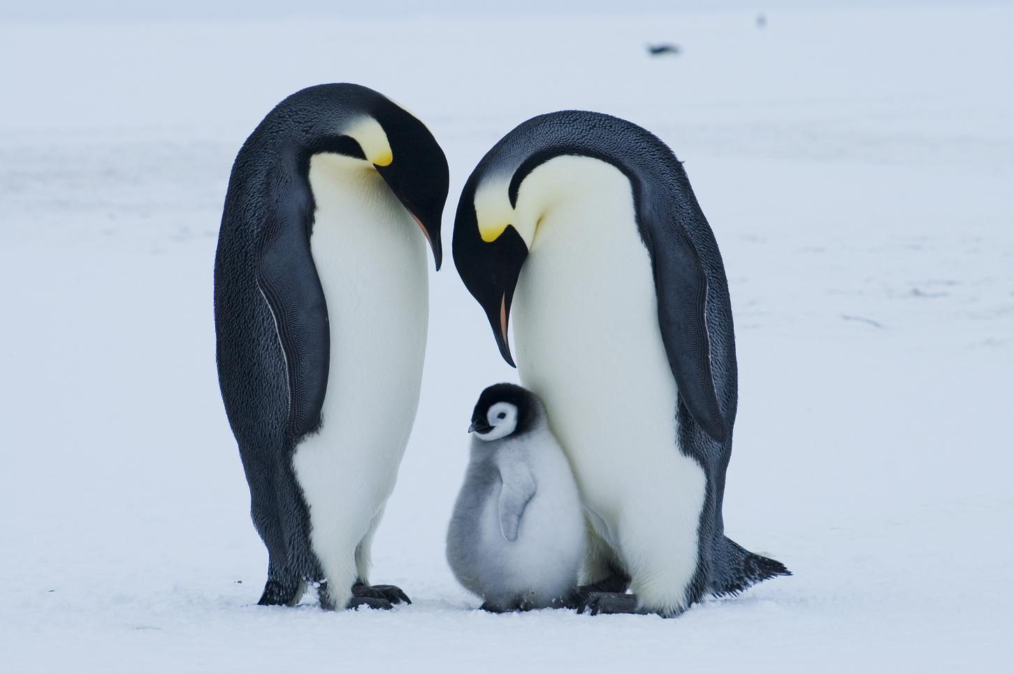 Penguin family photo
