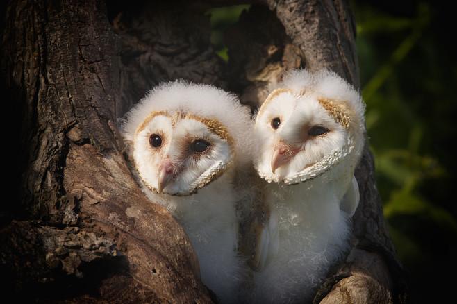 Owl-Wkshop 41117.jpg