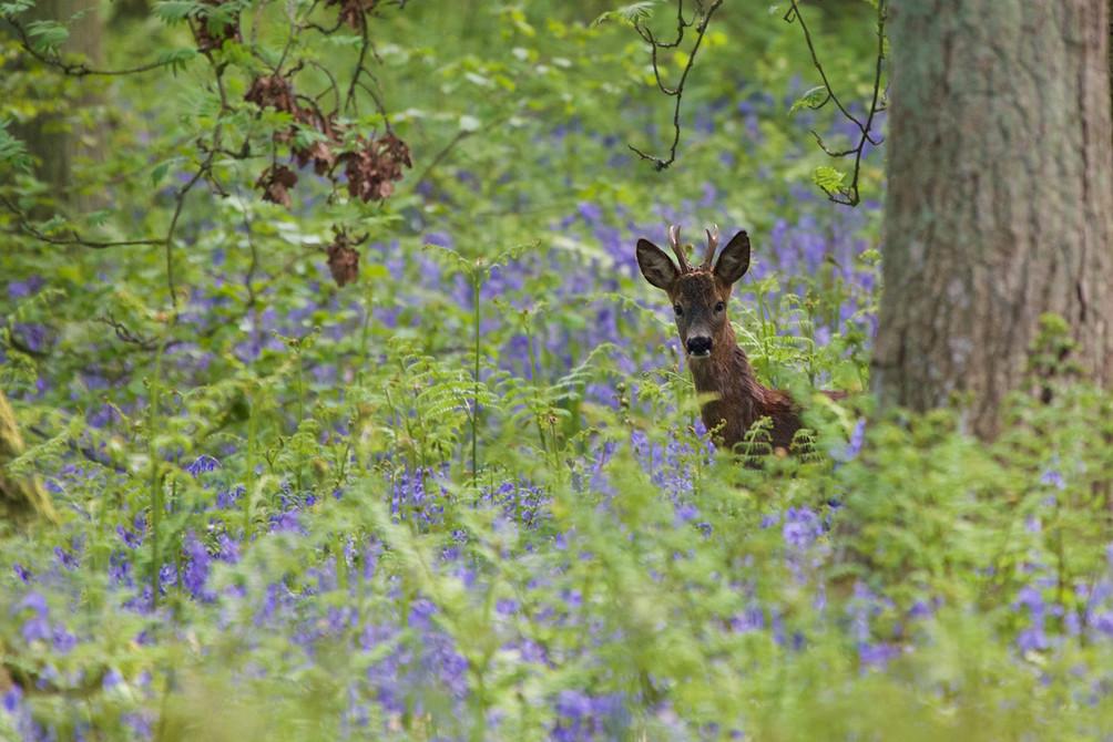 bambi copy.jpg