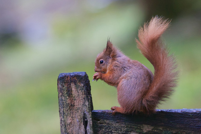squirrels 27-02-16 37323.jpg