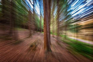A warp in the woods!