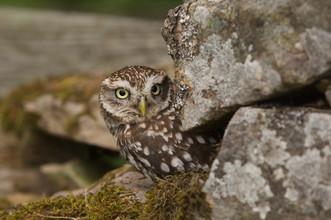 Owl-Wkshop 42787.jpg