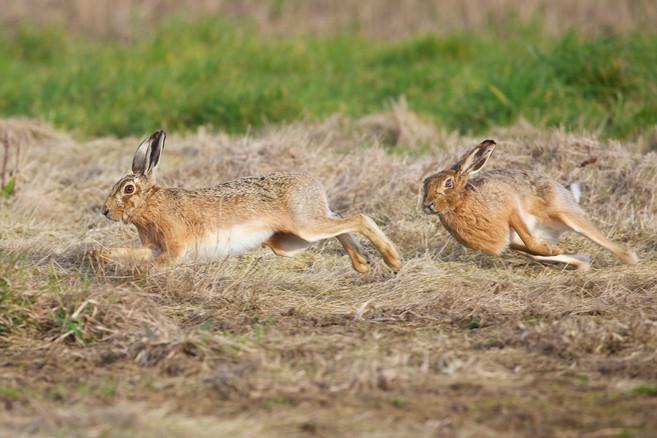 hares 21-03-16 36717 - Version 2 copy1.j
