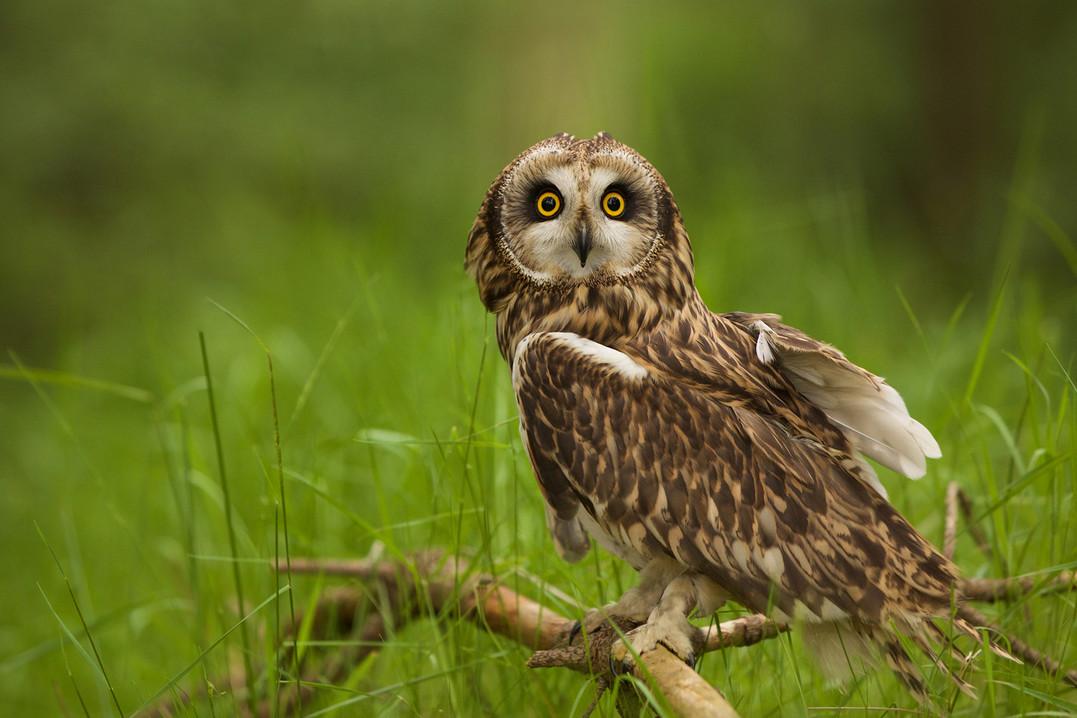 Owl-Wkshop 42070.jpg