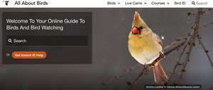 All About Birds - Online Guide to Birds and Bird Watching
