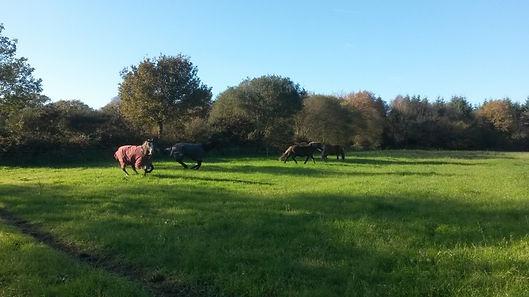 jumlait chevaux.jpg