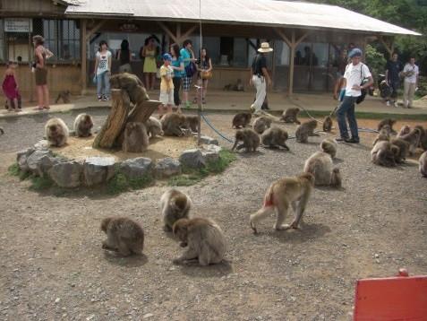 Arasiyama Monkey Park.jpg