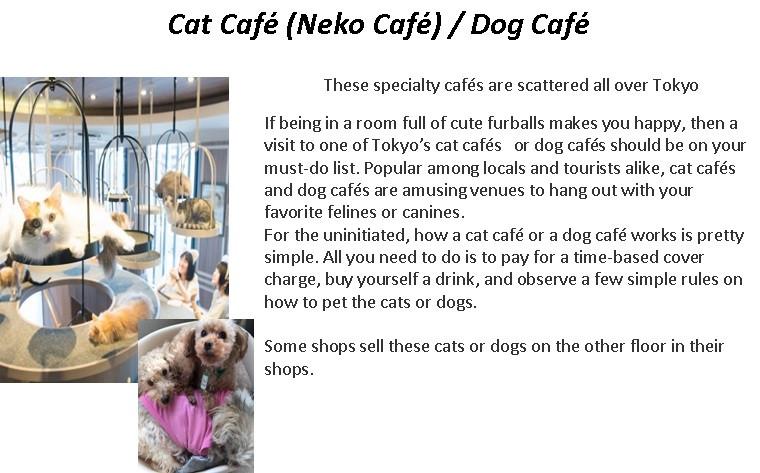Cat Cafe.jpg