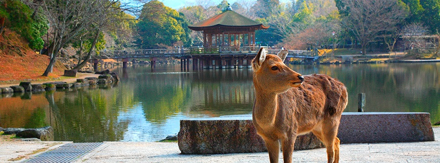 Nara Park Deer.jpg