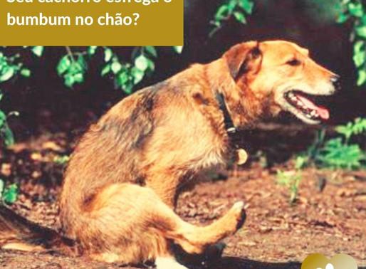 O seu cão arrasta o bumbum no chão?