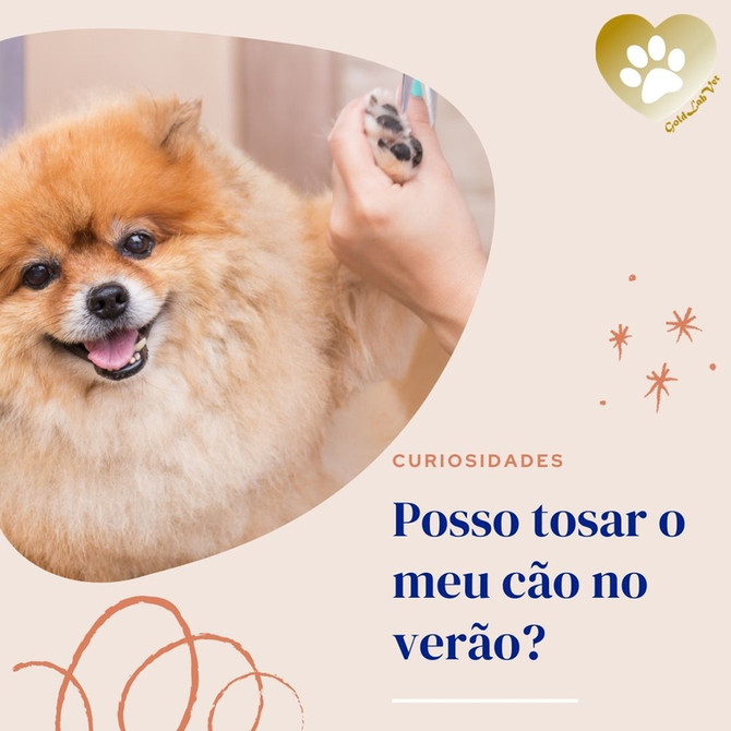 Posso tosar o meu cão no verão?