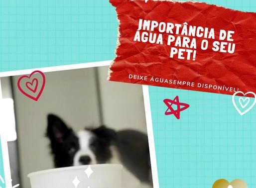 A importância de água para o seu Pet!